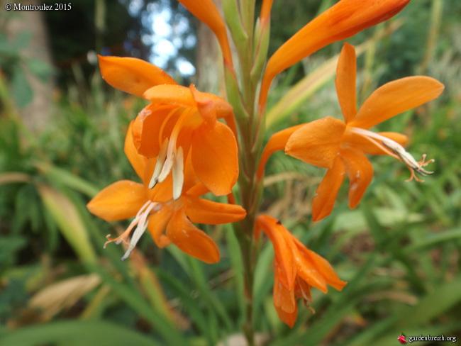 Floraisons du mois de juillet - Page 12 GBPIX_photo_685089