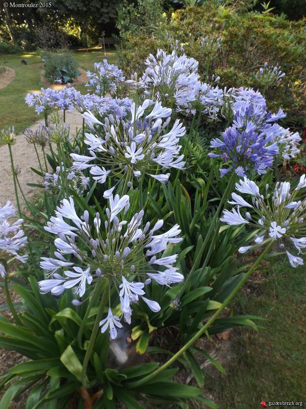 nos jardins prennent-ils des vacances ? - Page 2 GBPIX_photo_685913