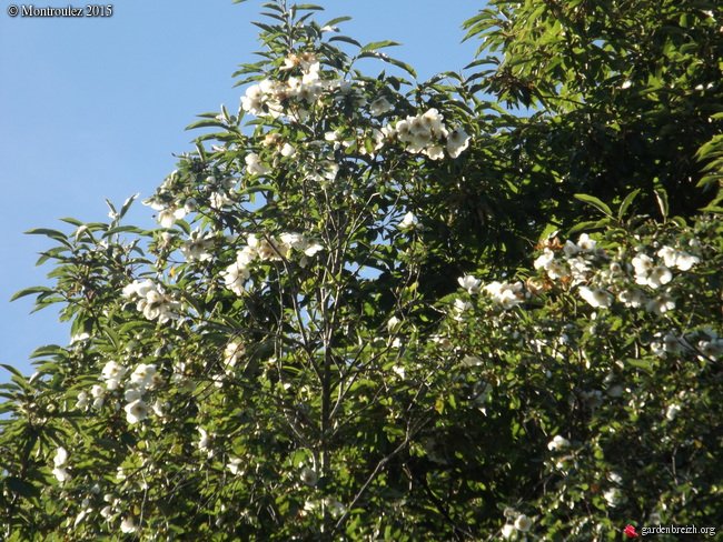 Floraisons du mois d'Août - Page 10 GBPIX_photo_685919