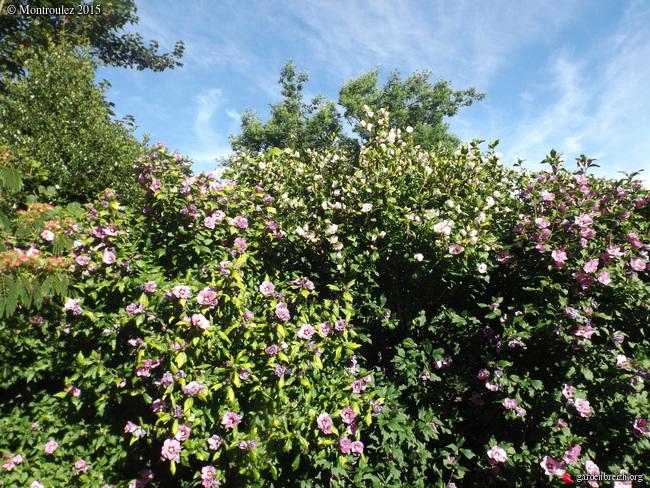 nos jardins prennent-ils des vacances ? - Page 2 GBPIX_photo_685927