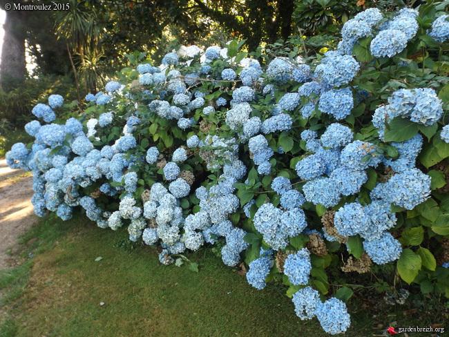 nos jardins prennent-ils des vacances ? - Page 2 GBPIX_photo_685928
