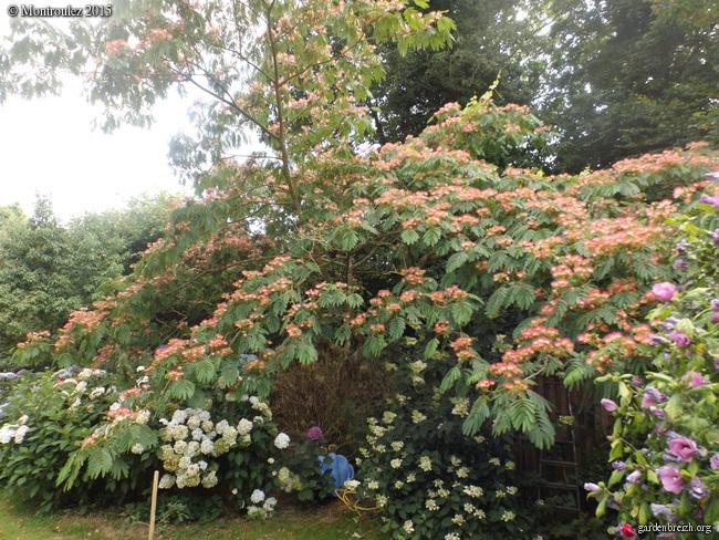 nos jardins prennent-ils des vacances ? - Page 2 GBPIX_photo_687677