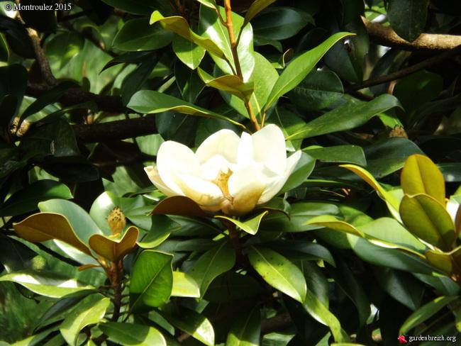 la rentrée du jardin GBPIX_photo_690306