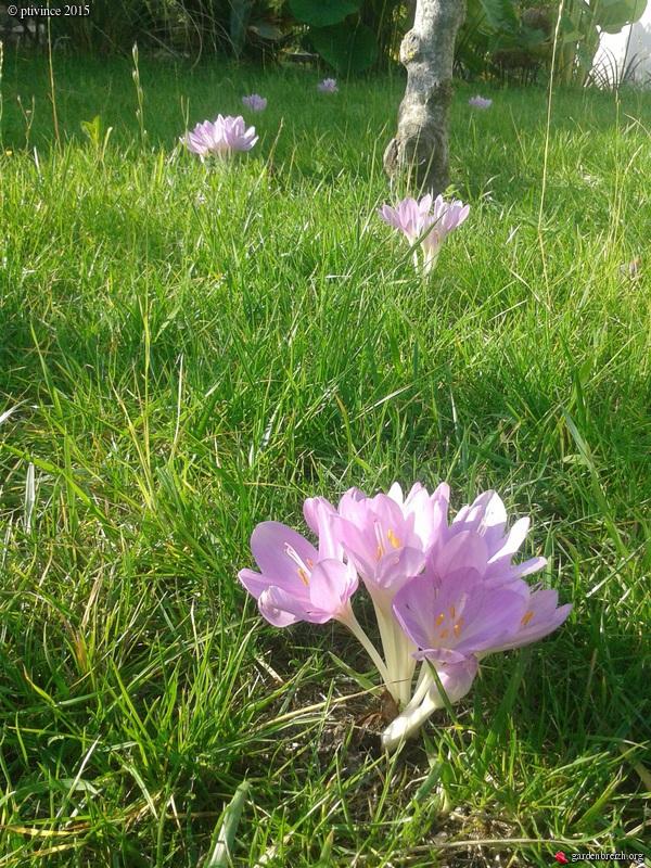 la rentrée du jardin - Page 3 GBPIX_photo_691586