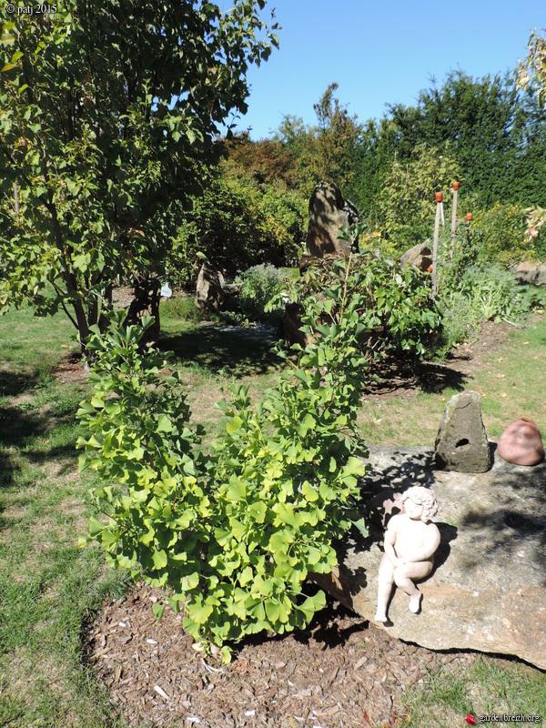 Ginkgo biloba - arbre aux quarante écus - Page 7 GBPIX_photo_691609