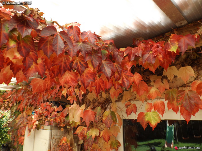 Ambiance automne 2015 GBPIX_photo_693246