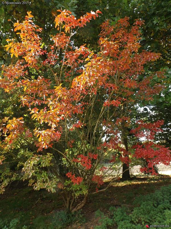 Ambiance automne 2015 GBPIX_photo_693645