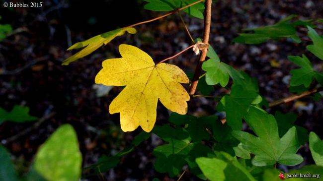 Ambiance automne 2015 - Page 2 GBPIX_photo_693794
