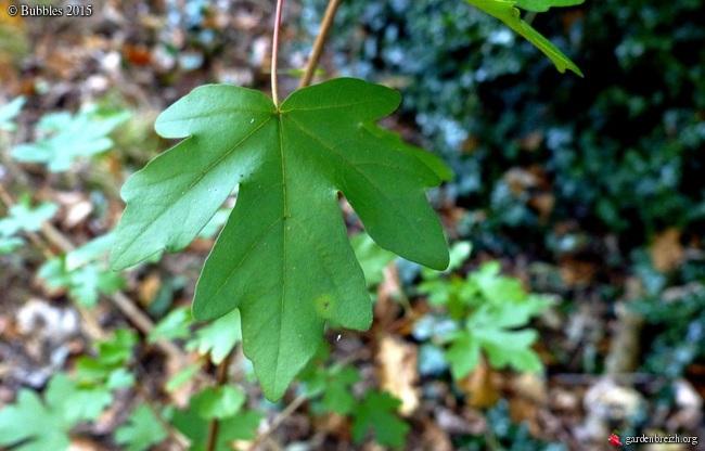 Ambiance automne 2015 - Page 2 GBPIX_photo_693795