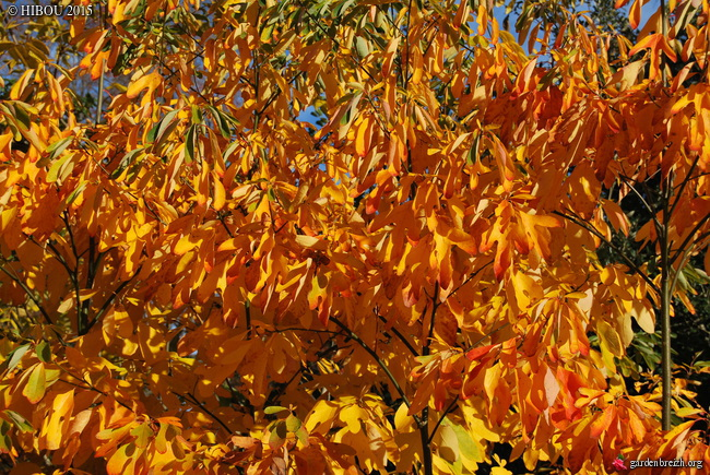Ambiance automne 2015 - Page 7 GBPIX_photo_695120