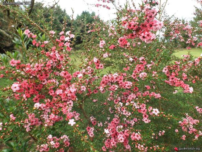 Floraisons de décembre  - Page 7 GBPIX_photo_698863
