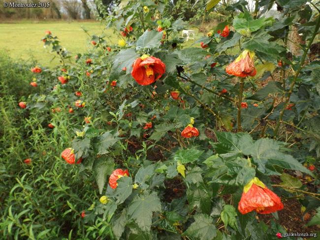 Floraisons de décembre  - Page 7 GBPIX_photo_698865