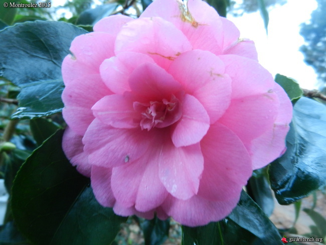 Floraisons de décembre  - Page 7 GBPIX_photo_698868