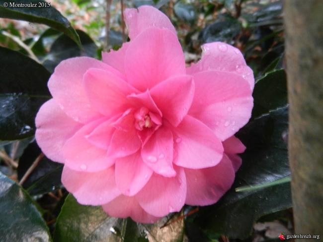 Floraisons de décembre  - Page 7 GBPIX_photo_698869