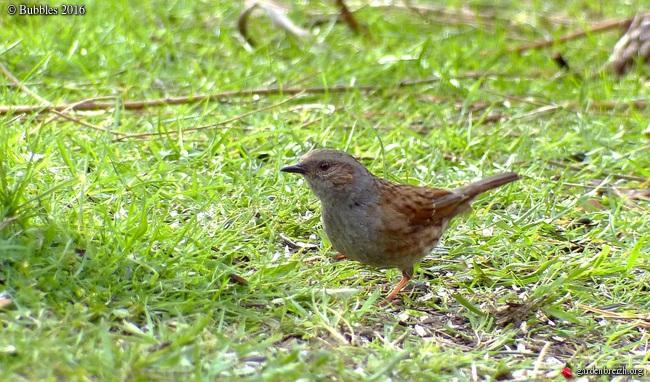 les visiteurs à plumes sauvages - 1 - Page 40 GBPIX_photo_704854