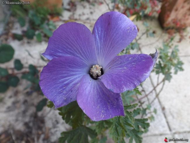 éclosions martiennes, non, oups, marsiennes  - Page 3 GBPIX_photo_705100