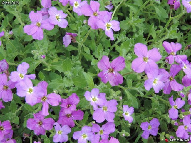 Les botanistes  - Page 5 GBPIX_photo_706653