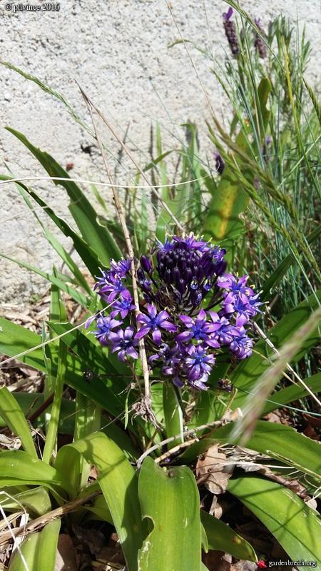 avril, jardin fébrile - Page 5 GBPIX_photo_707488