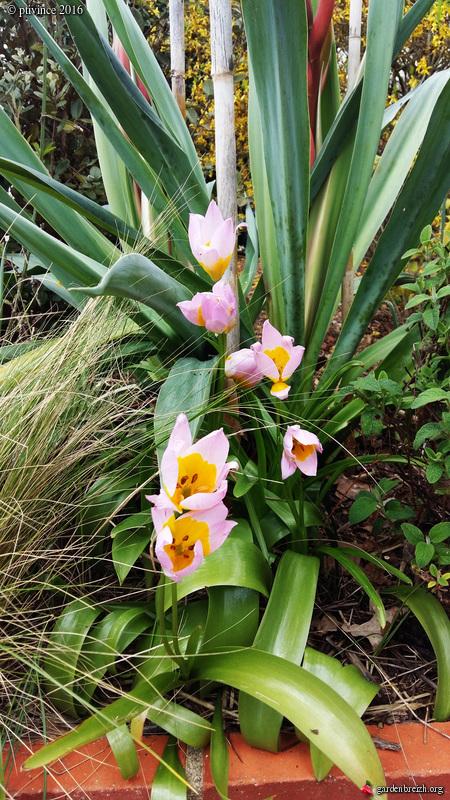 avril, jardin fébrile - Page 5 GBPIX_photo_707489