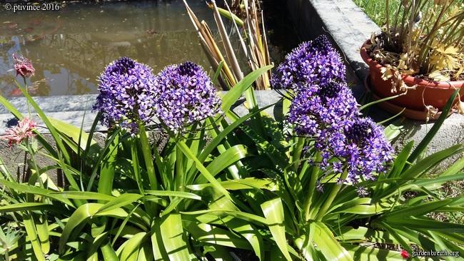 joli mois de mai, le jardin fait à son gré - Page 3 GBPIX_photo_709917