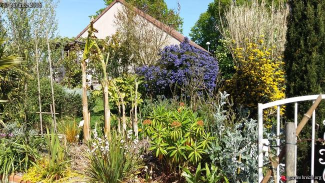 joli mois de mai, le jardin fait à son gré - Page 3 GBPIX_photo_709918