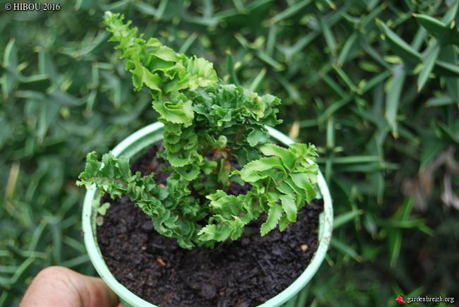 arbuste et fougère [identification non terminée] GBPIX_photo_721344