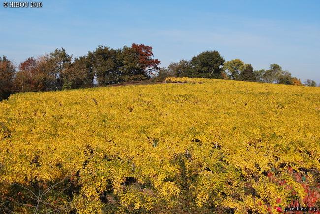 lumières d'automnes et paysages - automne 2016 GBPIX_photo_727074