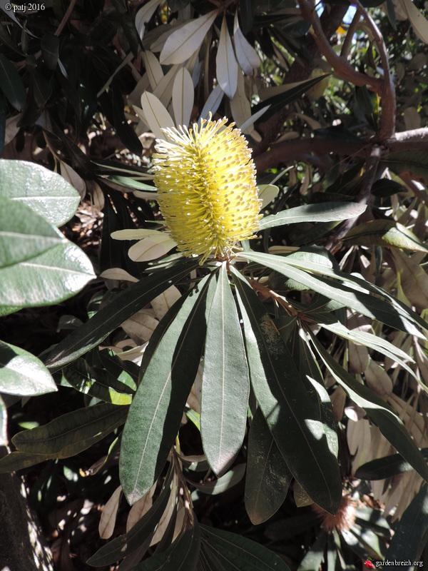 Les botanistes  - Page 6 GBPIX_photo_729178