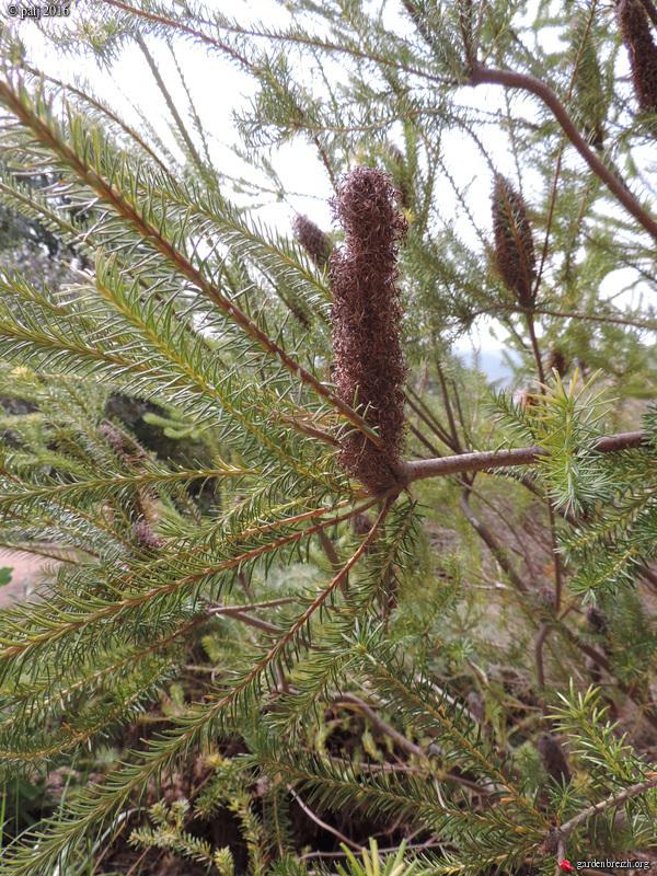 Les botanistes  - Page 6 GBPIX_photo_729268