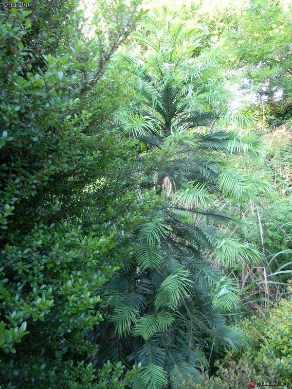 Les botanistes  - Page 6 GBPIX_photo_730074