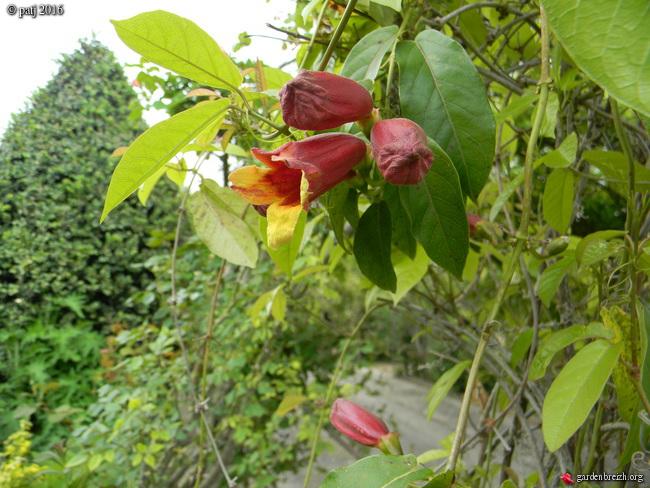 Les botanistes  - Page 7 GBPIX_photo_730162