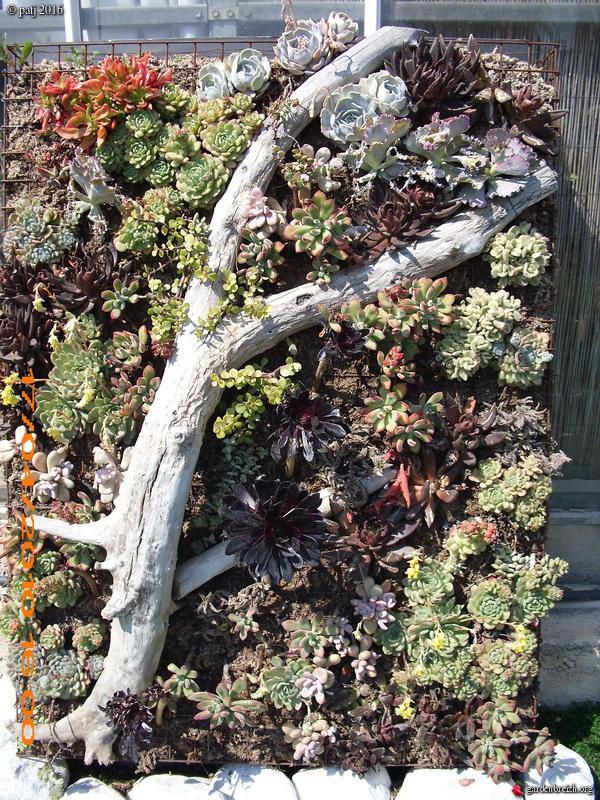 murs végétalisés extérieurs  - Page 3 GBPIX_photo_730195