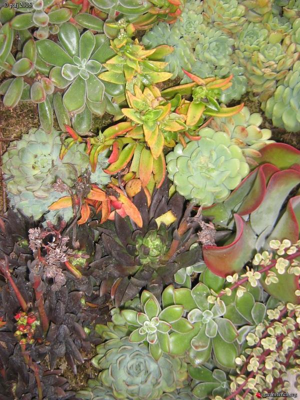 murs végétalisés extérieurs  - Page 3 GBPIX_photo_730200