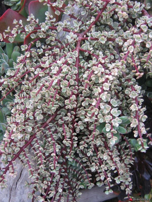 murs végétalisés extérieurs  - Page 3 GBPIX_photo_730205