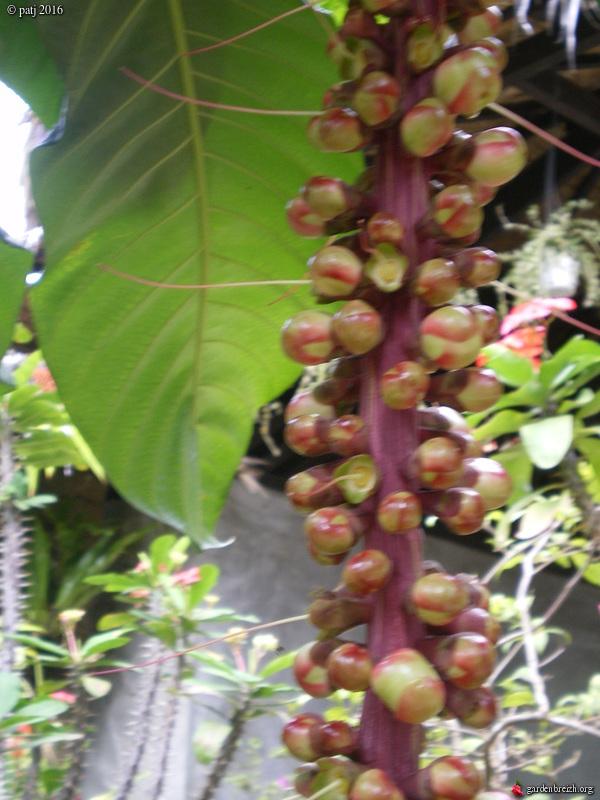 Les botanistes  - Page 6 GBPIX_photo_730289