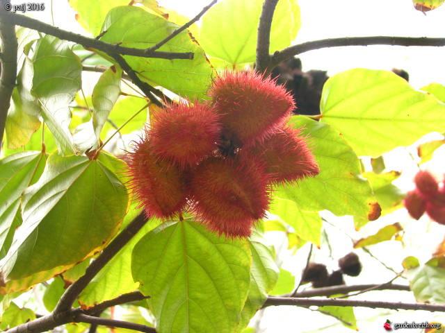 Les botanistes  - Page 8 GBPIX_photo_730376