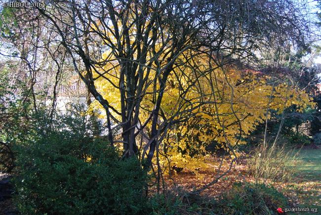 feuillages d'automne 2016 - Page 3 GBPIX_photo_730584
