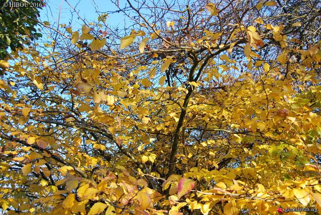 feuillages d'automne 2016 - Page 3 GBPIX_photo_730587