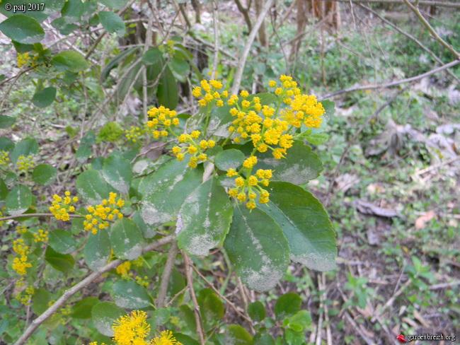 Les botanistes  - Page 5 GBPIX_photo_738198