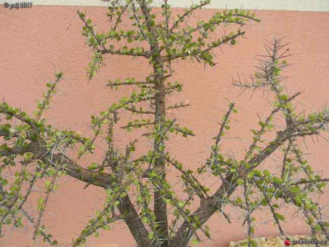 Les botanistes  - Page 5 GBPIX_photo_739292