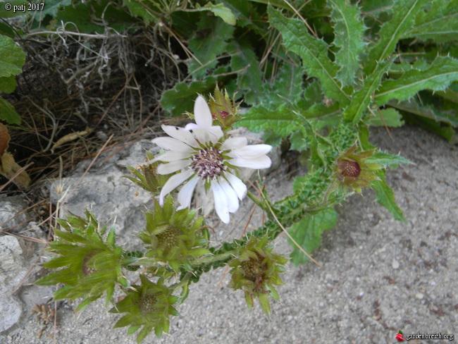 Les botanistes  - Page 7 GBPIX_photo_739978