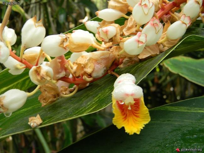 Les botanistes  - Page 5 GBPIX_photo_742059