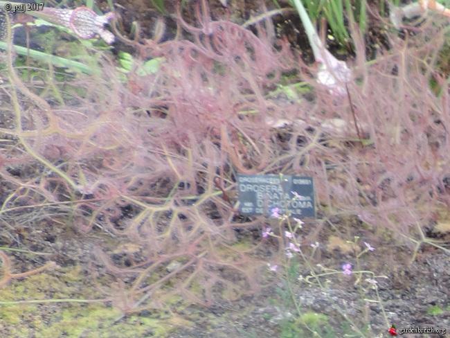 Les botanistes  - Page 8 GBPIX_photo_742975