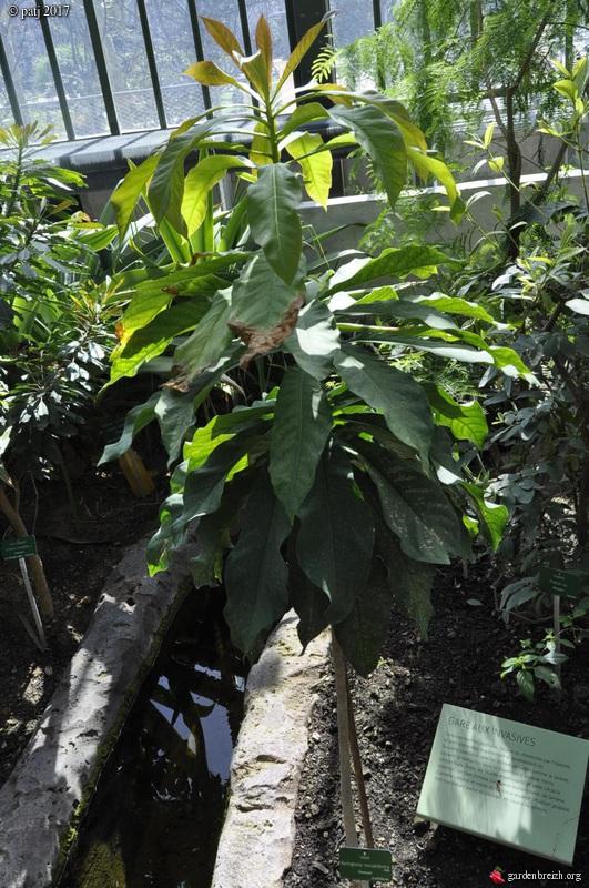 Les botanistes  - Page 6 GBPIX_photo_743040