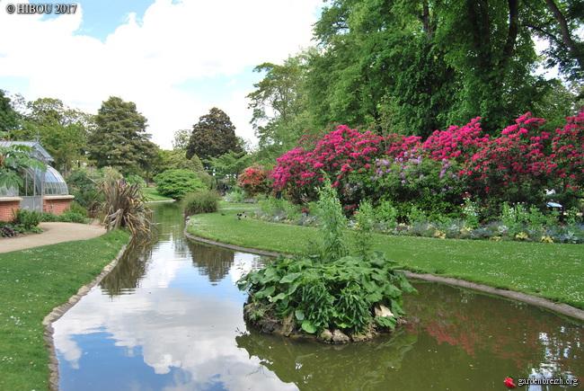 Rhododendron cv. ? [identification à suivre] GBPIX_photo_745976