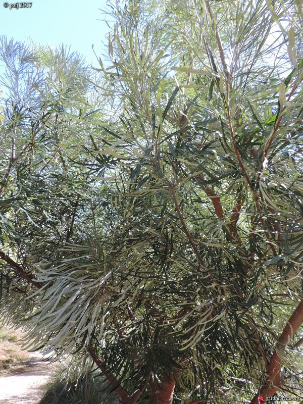 Les botanistes  - Page 6 GBPIX_photo_749190