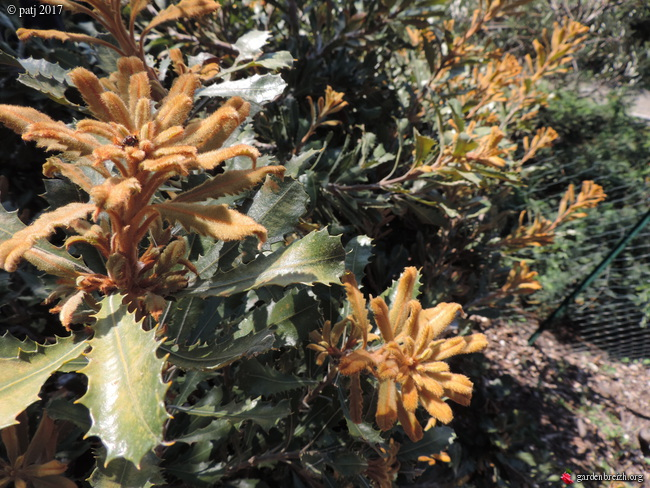 Les botanistes  - Page 6 GBPIX_photo_749512