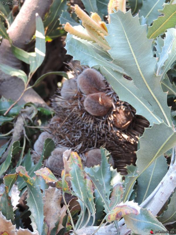 Les botanistes  - Page 6 GBPIX_photo_749513