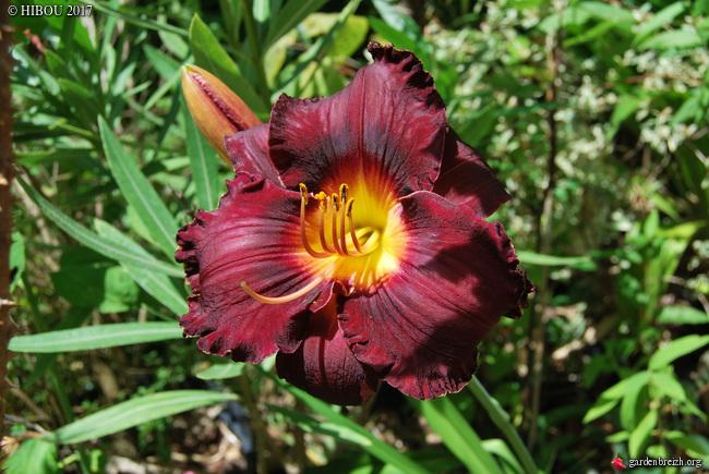ces quelques fleurs de nos jardins - Page 4 GBPIX_photo_749569
