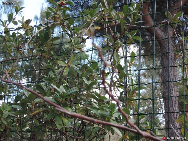 Les botanistes  - Page 2 GBPIX_photo_749702